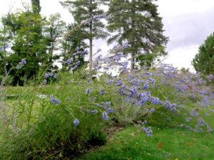 Jardins libres : découvrez les réalisations de l'agence de paysagistes Alain Charles